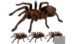 Stickers / autocollants araignées